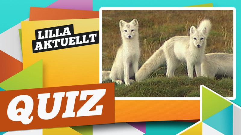 Lilla Aktuellt quiz v 4